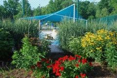 Heman Park Pool 2