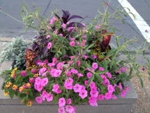 Planter in the Delmar Loop