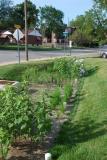 UCity Firehouse Rain garden