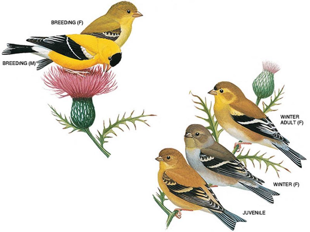 Common birds - U City In Bloom