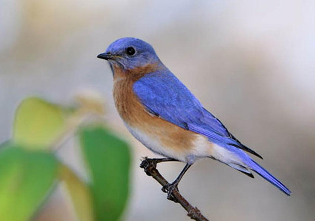 Common birds | U City In Bloom